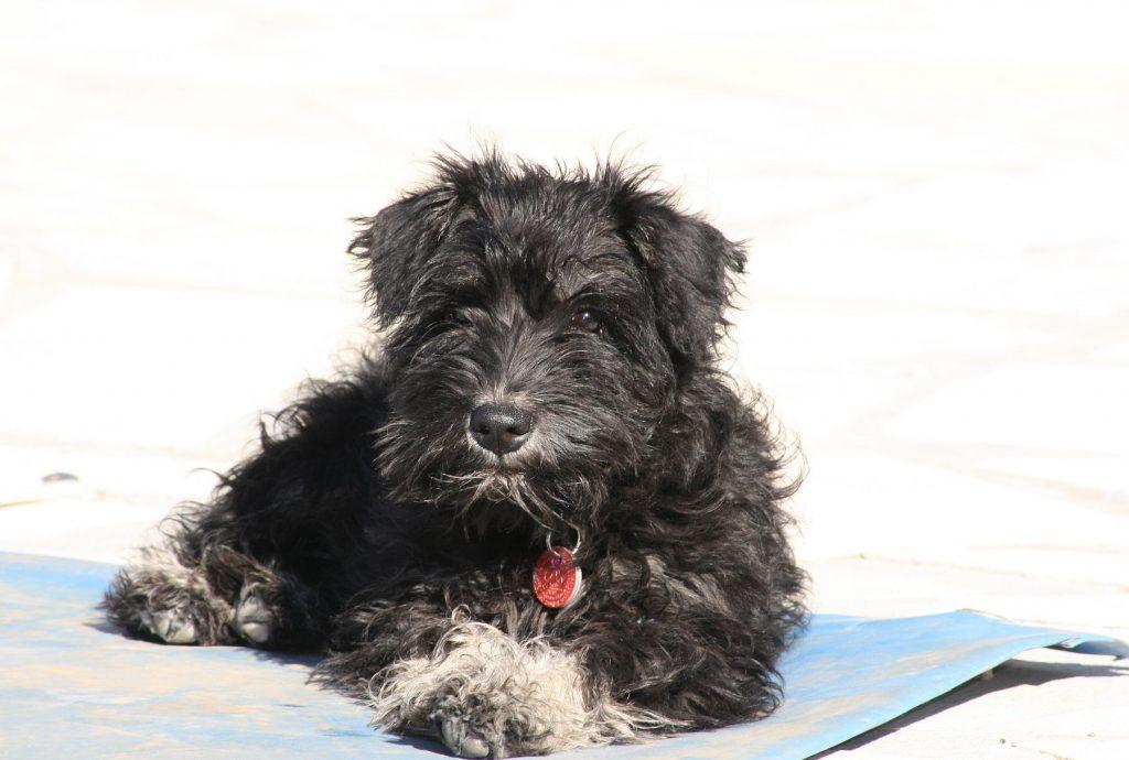 Pup Bella
